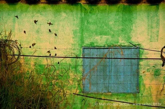 casa com pássaros